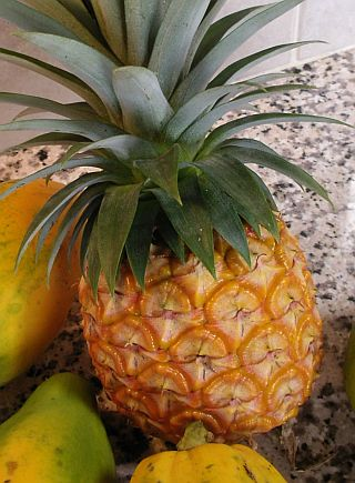 Bring Pineapples to the Mainland: You Have A Choice