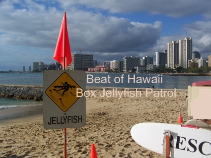 Tip for a Jellyfish Free Hawaii Vacation