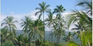 LA to Honolulu This Summer $205 Each Way