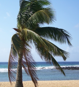 LAX to HNL $99 Late Summer/Fall Including Thanksgiving