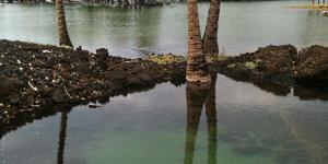 Big Island Surf Films and Fishponds