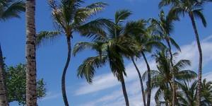Super Bowl and Hawaii Rambutans: An Odd Pair Revisited