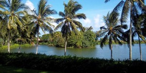 1,000 Bird Strikes Threaten Kauai Airport