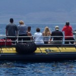 Whale Watching off Maui