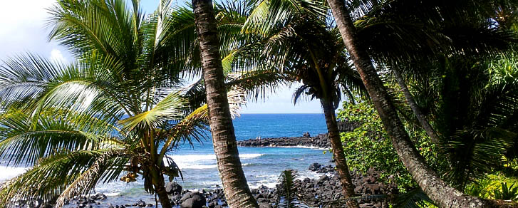 Hawaii Beach with Palm Trees