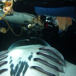 american safari hawaii - Big Island manta ray night snorkeling