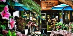 Half-Off Gourmet Hawaii Coffee Bar in Honolulu