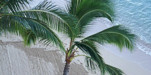 Hawaii beach palm tree