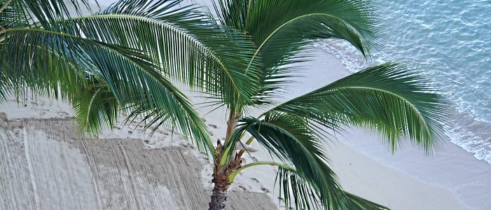 Hawaii beach palm tree