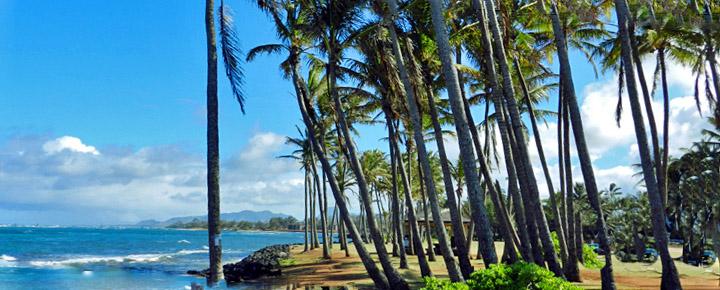 New Hawaii Flights