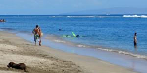 Hawaii Deals | Score a $249 Waikiki Hotel For $135
