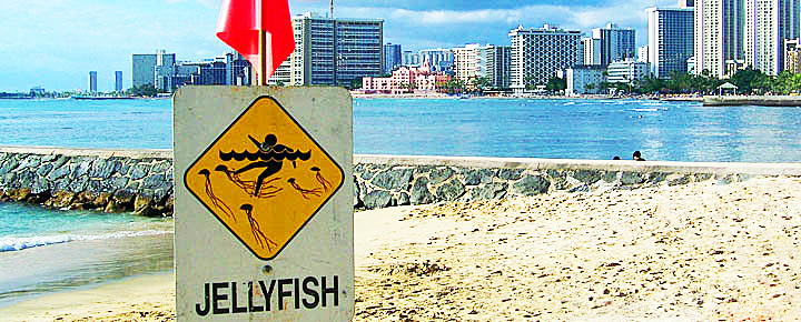 Jellyfish Sting | 2019 Hawaii Caution Dates and Treatments