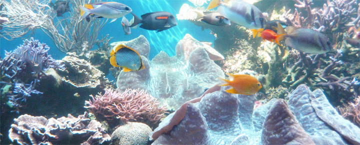 Six Ways To Protect Endangered Hawaii Coral Reefs