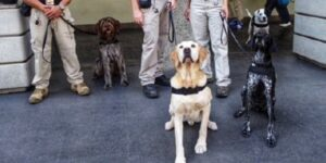 Dogs Could be Part of Hawaii's Reopening Plans