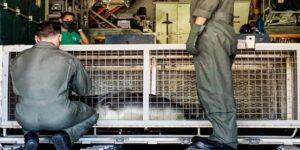 Saving Endangered Hawaiian Monk Seals – US Coast Guard Rescue Flight
