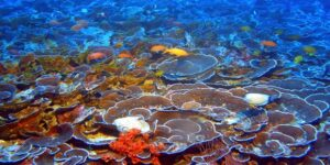 How Hawaii Coral Reefs Are Adapting | New Hopeful Study