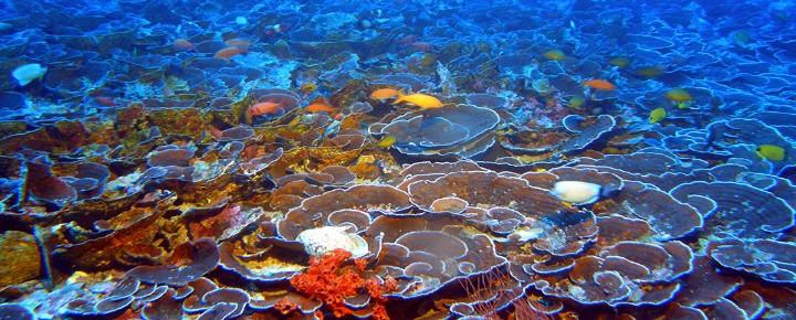 How Hawaiian Corals Are Adapting | New Hopeful Study