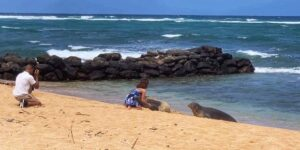 Hawaiian Monk Seals: Don't Touch! Latest Visitor Incident Upsetting