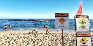 Shark Closes Lydgate Beach Kauai | Sharks in Hawaii