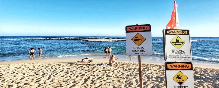 Shark at Poipu Beach Kauai | Sharks in Hawaii