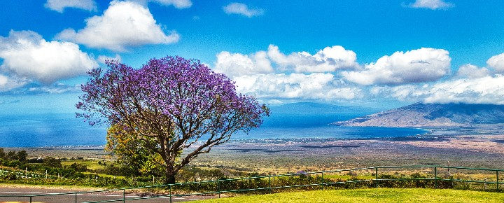Best Hawaii Road Trips   Things To Do On Maui